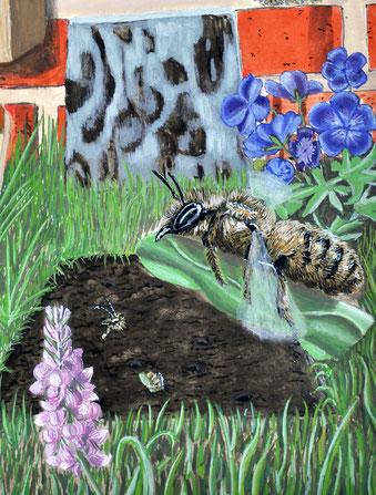 Wird eine Gartenplatte entfernt, dient der brachliegende Boden Blattschneiderbienen als Brutstätte.