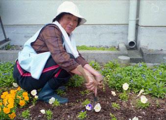 die Frühjahrsblumen wurden gerade eingesetzt