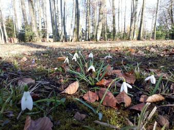 Frühling im Schlosspark in Steyr