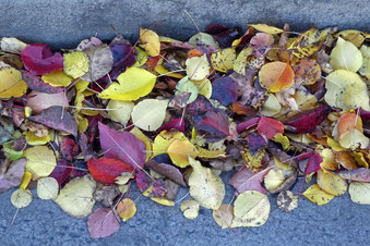 autumn leaves blown into the gutter