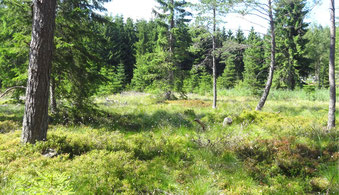 Moorlebensraum im Gemeindegebiet Bad Großpertholz