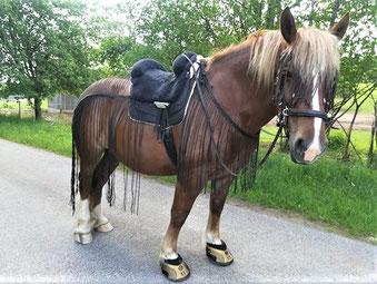 Fly-Sheet, Horseback, Riding