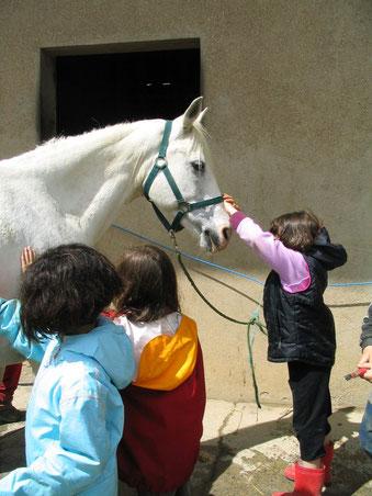Le cheval attire et fascine les enfants.