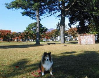 2013.11.09 (Sat) The North Square beside Kin-ken Center