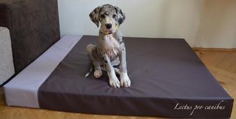 Hundekissen XXL in Wunschfarben und Wunschgröße angefertigt