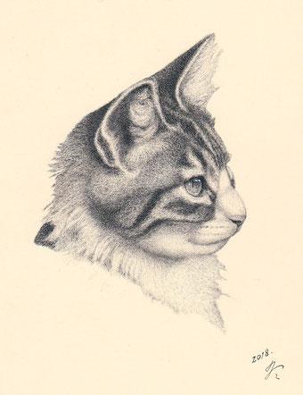 「猫の肖像13」 細密ペン画 220×180㎜