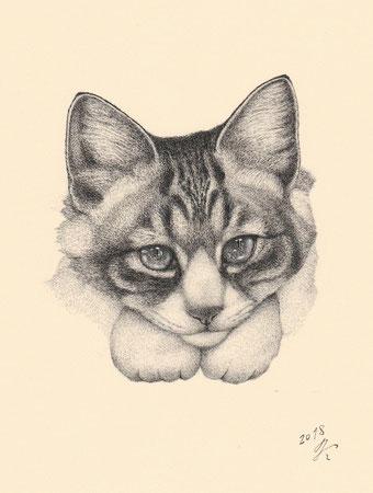 「猫の肖像14」 細密ペン画 220×180㎜
