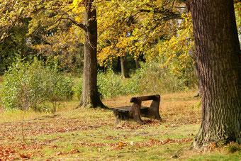 Lecoin-nature propose de la méditation en pleine nature pour les adultes dans le canton de Genève.