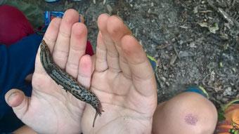Pour un anniversaire d'enfants, Lecoin-nature propose l'activité les minuscules du sol dans le canton de Genève.