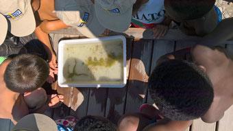 Pour un anniversaire d'enfants, Lecoin-nature propose l'activité le petit monde aquatique dans le canton de Genève