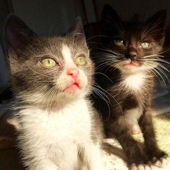 parodi's cats cat cafuge
