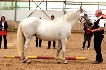 Ismara Berber Eintragung 2014