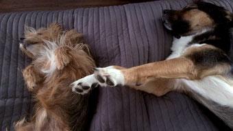 Tipps zur richtigen Hundehaltung - Mindestens 50% täglicher Schlaf - Traveldog - fair4world