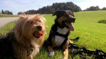 Tipps zur richtigen Hundehaltung - Viel Bewegung - Traveldog - fair4world