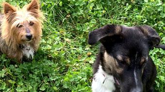 Tipps zur richtigen Hundehaltung - Nicht streng, sondern konsequent - Traveldog - fair4world
