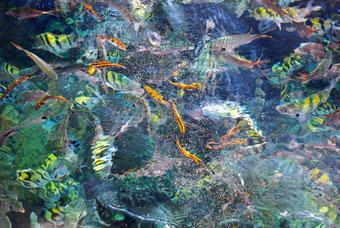 Unterwasserwelt vor der Insel Saona