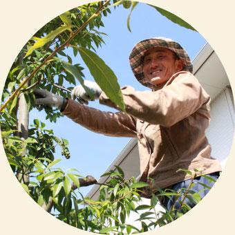 浜松市の植木屋・庭師「門西造園」剪定の様子