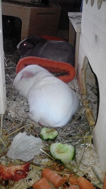 Bella (vorne) mit Petri (hinten)