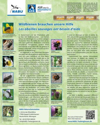 Infotafel Wildbienen Taubergießen