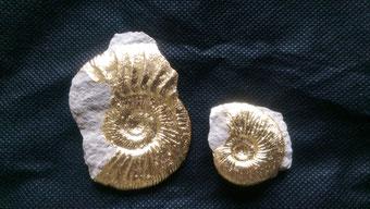 Fossilien aus dem Oberen Jura (Altmühltalregion) und Schiefer von der Schwäbischen Alb