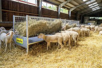 Agro-Widmer Stalleinrichtungen - Aktion Schafstalleinrichtungen Patura im September und Oktober