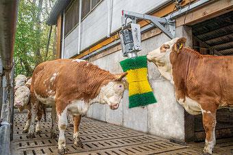 Agro-Widmer Stalleinrichtungen - Viependelbürste Patura