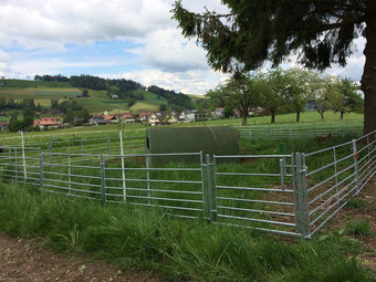 Agro-Widmer Stalleinrichtungen - Foto Kleintier- Schafabtrennung