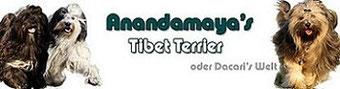 Tibet-Terrier-Zwinger Anandamaya's