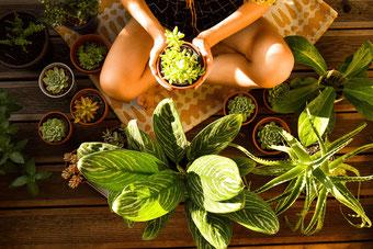 Postvorschlag 1: Pflanzen Haul — Mit nur einem Einkauf zu einer grünen Wohnung RiekesBlog.com