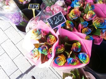 珍しい、7色のバラです