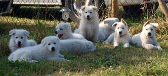 nach 8 Wochen schon kleine Hunde