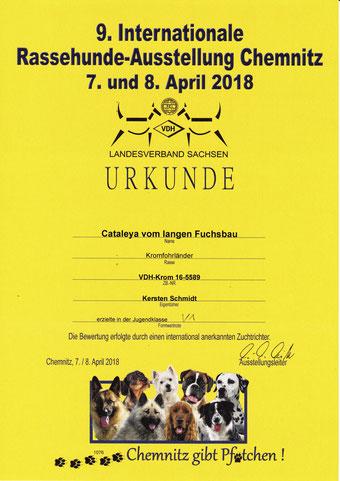 Kabous Urkunde von der Internationalen Rassehunde-Ausstellung Chemnitz 2018