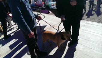 Nuestro perrito OSCAR también fue bendecido en Lorca.