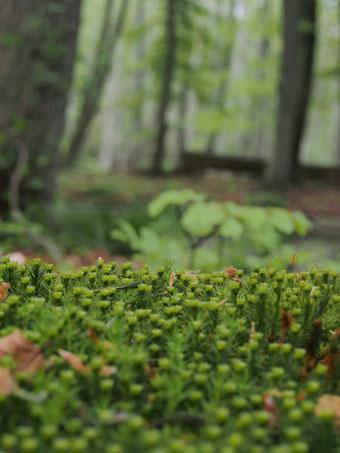 Wichtig ist der Blickwinkel, um den Wald zu verstehen