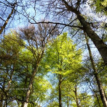 kp Kitsch-paradise artisans créateurs artiste artist créateurfrancais artisanat art bretagne nature naturelove forest foret arbre magnifique spéctaculaire gigantesque