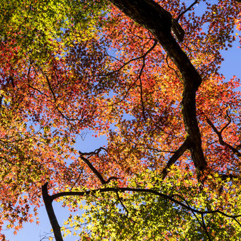 妙法山の紅葉