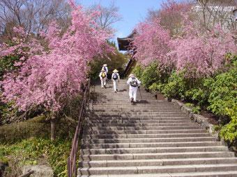 勝尾寺最後の階段・南茂さん撮影