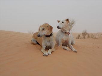 Risha I. und Baraq