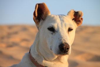Risha I., die weise alte Dame - nun im Hundehimmel