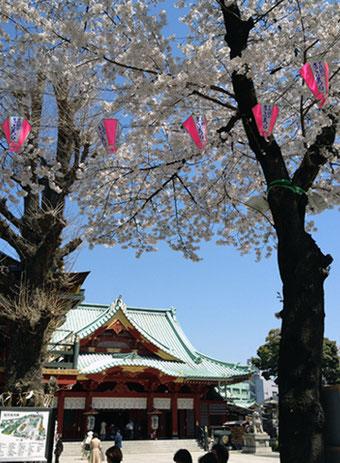 神田神社(神田明神) 桜