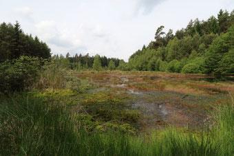 """Sumpflandschaft, """"Rotes Wasser"""""""