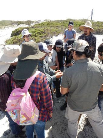 Observación de especies de lagartijas en campo.