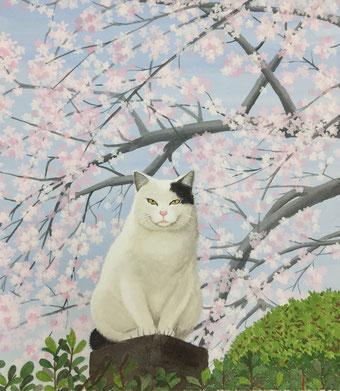 「桜と猫」