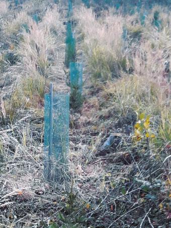Wald, Forst, Kulturpflege, Bestandspflege, Hilfe bei, Niederbayern, Landkreis Straubing-Bogen, Waldbesitzer, Unterstützung, Beratung für, Forstpflege, Rückegassen planen