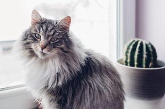 Katzen Erstausstattung Katzen - Langhaarrassen brauchen besonders viel Hilfe bei der Fellpflege