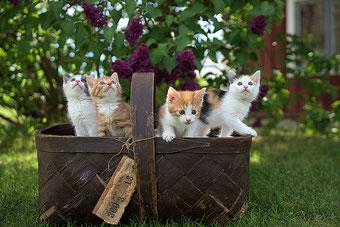 Katzen Kinder spielen im Garten