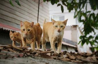 Rudel Straßenkatzen