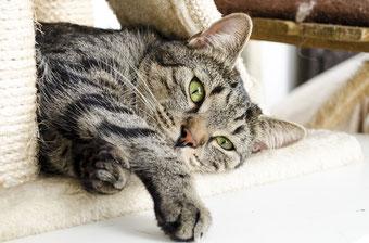 Katze relaxt auf einem Kratzbaum günstig