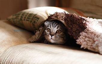 Katze unter einer Decke, schaut süß