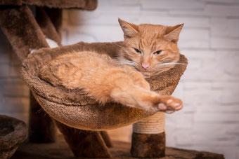 Kratzbaum XXL Liegefläche mit Katze